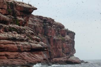 Les falaises en arrivant sur l'ile de Bonaventure